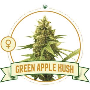 Green Apple Kush Feminized