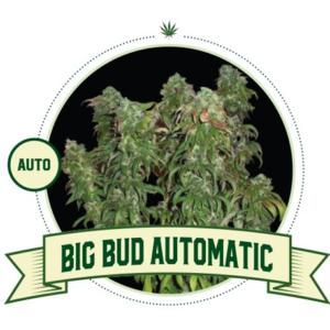 big-bud-auto