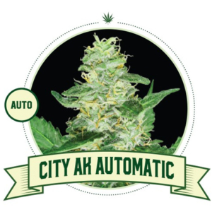 City AK Automatic