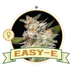 Easy – E Feminized
