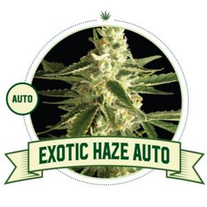 Exotic Haze Automatic