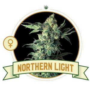 Northern Light Feminized