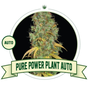 Pure Power Plant Automatic