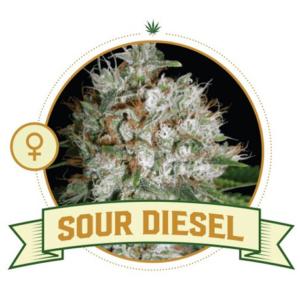 Sour Diesel Feminized