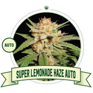 Super Lemonade Haze Automatic